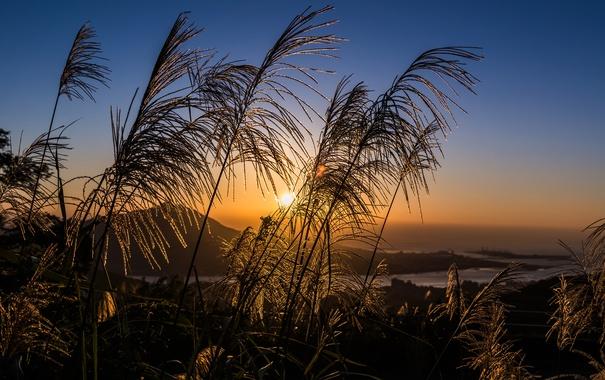 Фото обои поле, небо, трава, солнце, закат, тучи, вечер