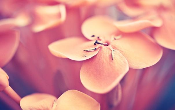 Фото обои цветок, макро, фото, лепестки
