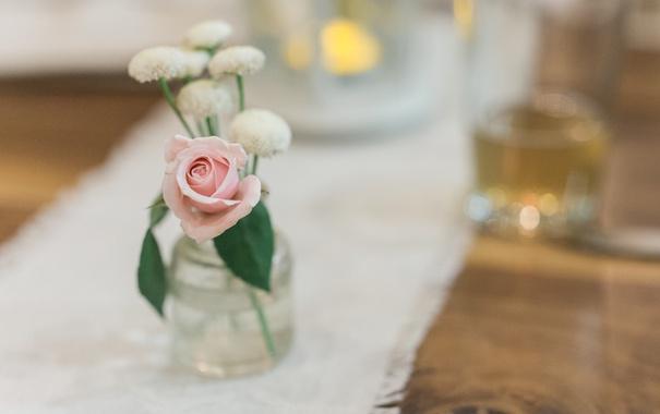 Фото обои цветок, роза, лепестки