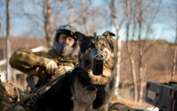 Фото обои собака, армия, солдат