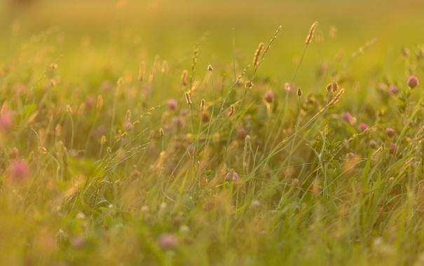 Фото обои поле, трава, природа