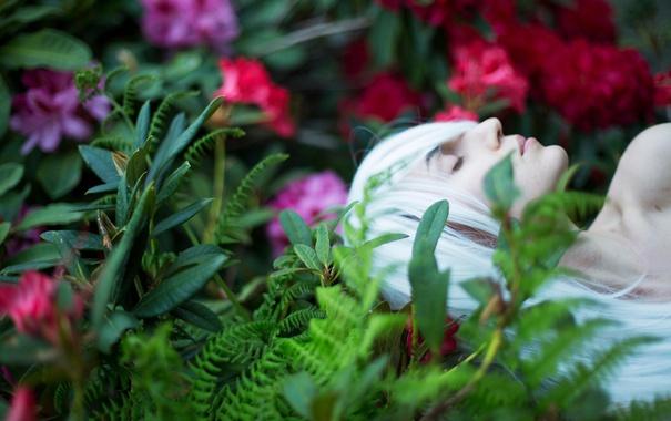 Фото обои девушка, цветы, сон, Lichon, белоснежные волосы