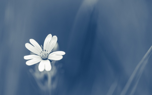 Фото обои цветок, весна, природа