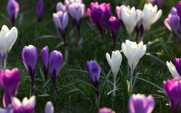 Фото обои цветы, фон, природа