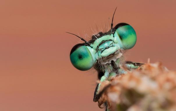 Фото обои макро, природа, жук