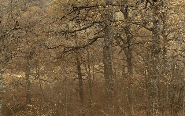 Фото обои деревья, лес, природа