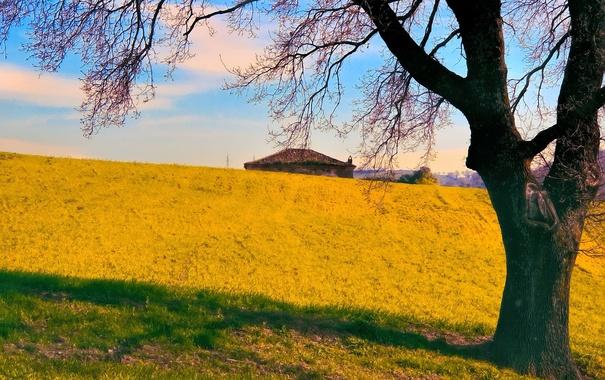 Фото обои крыша, трава, небо, холмы, дом, осень, дерево