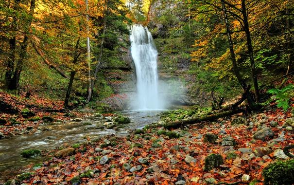 Фото обои лес, листья, деревья, камни, скалы, водопад, Осень