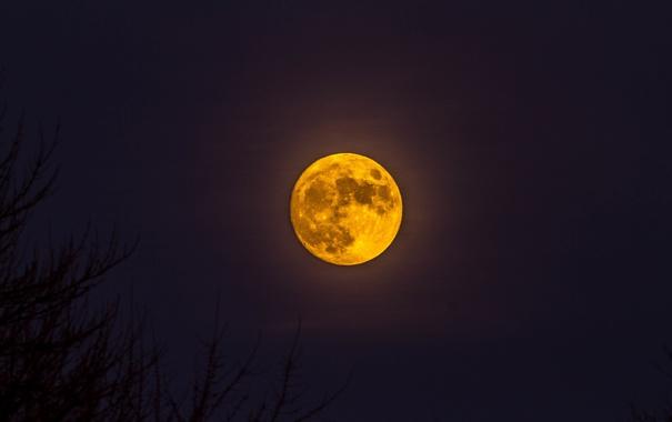 Фото обои ночь, луна, спутник, силуэты