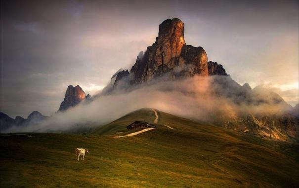 Фото обои небо, горы, дом, корова