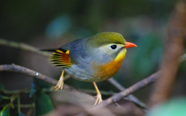 Фото обои птица, краски, цвет, ветка, перья