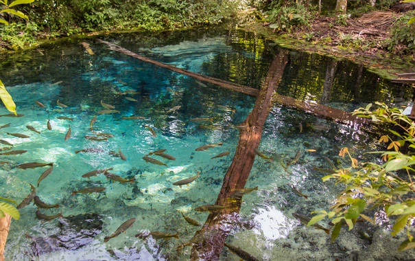 Фото обои trees, fish, pond, clear water
