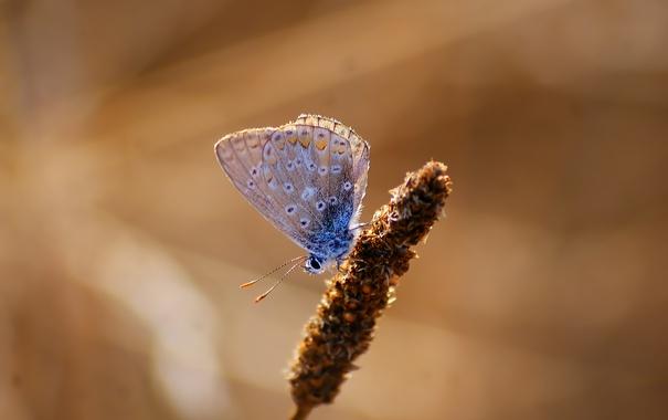 Фото обои бабочка, насекомое, боке