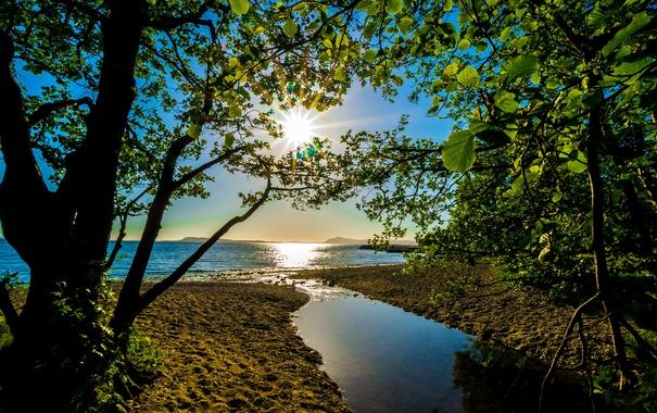 Фото обои ветки, берег, деревья, солнце, лето, вода, лучи