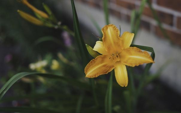 Фото обои цветок, желтые, лепестки, оранжевые