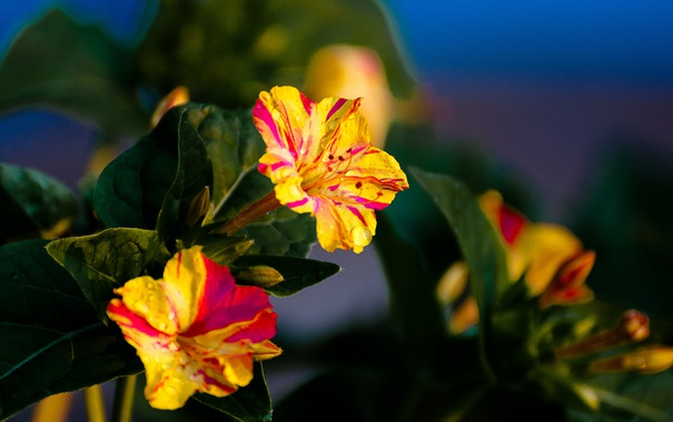 Фото обои сад, лепестки, природа, листья