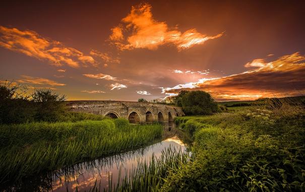 Фото обои цветы, мост, отражение, зеркало, поле, поток, куст