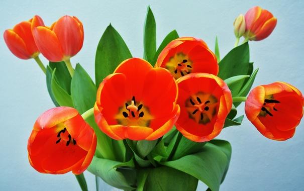 Фото обои листья, тюльпан, букет, лепестки