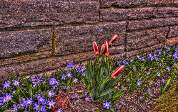 Фото обои дом, тюльпан, лепестки, hdr, двор