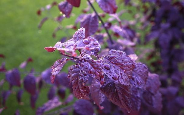 Фото обои лето, листья, капли