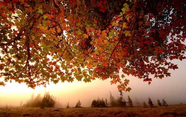 Фото обои осень, листья, туман