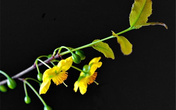 Фото обои цветы, природа, фон, растение, ветка