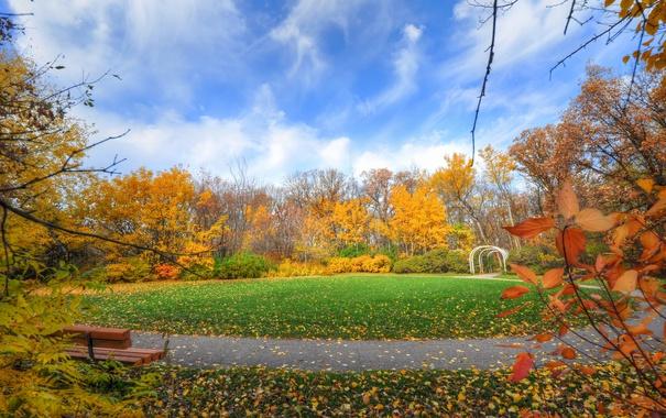 Фото обои осень, небо, трава, листья, деревья, парк, лужайка