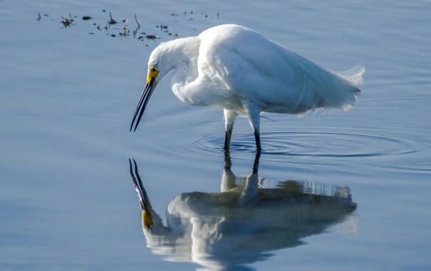 Фото обои вода, отражение, птица, перья, клюв