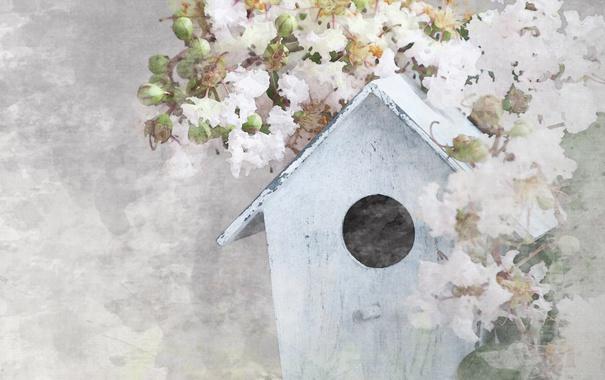 Фото обои Цветы, Домик, House Flowers