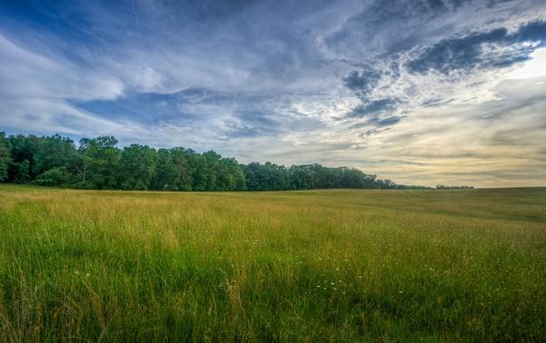 Фото обои поле, небо, трава, облака, деревья, сумерки, сельская местность