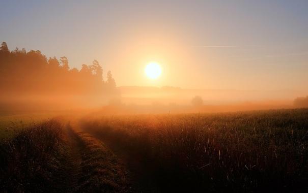 Фото обои дорога, поле, туман, утро