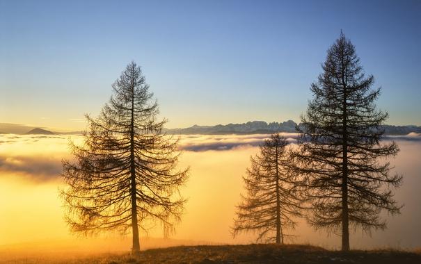 Фото обои небо, деревья, горы, туман