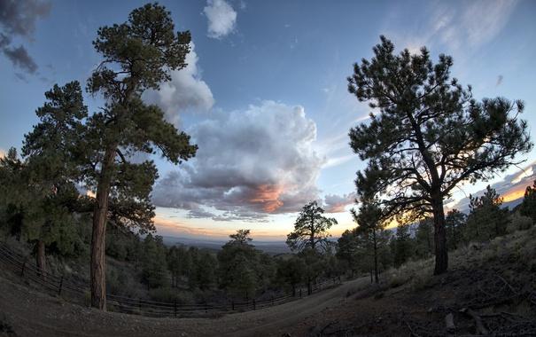 Фото обои небо, деревья, природа