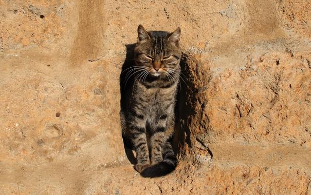 Фото обои стена, кошак, котяра, котэ