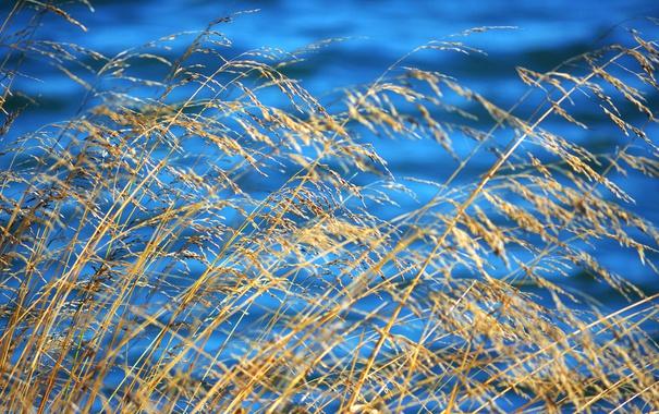 Фото обои осень, трава, вода, растение