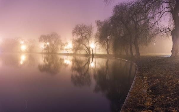 Фото обои вода, свет, деревья, туман, пруд, парк, фонари