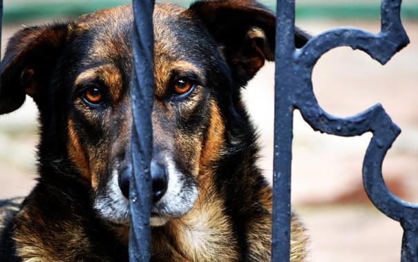 Фото обои взгляд, друг, забор, собака