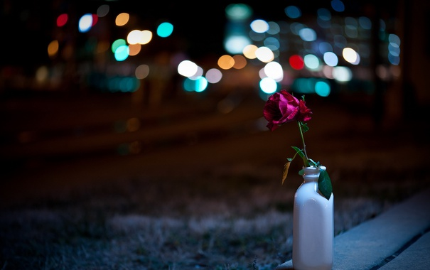 Фото обои город, ночь, цветок