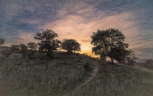 Фото обои деревья, закат, природа, фон