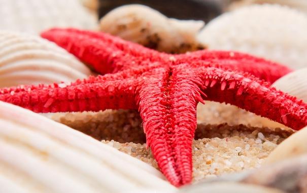 Фото обои природа, морская звезда, морские ракушки