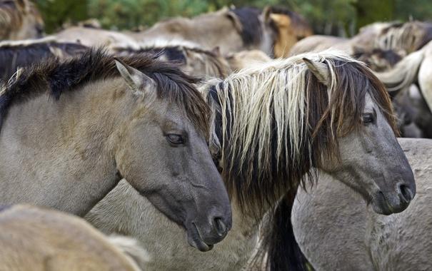 Фото обои конь, лошадь, профиль