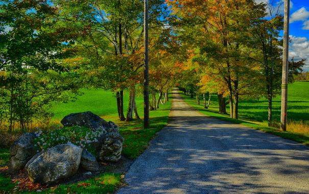 Фото обои дорога, осень, трава, деревья, камни