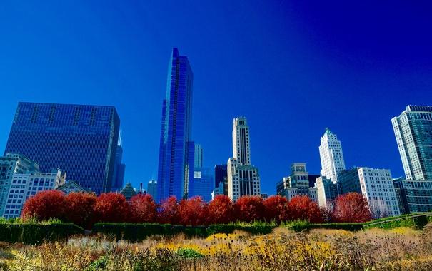 Фото обои осень, небо, деревья, дома, Чикаго, США