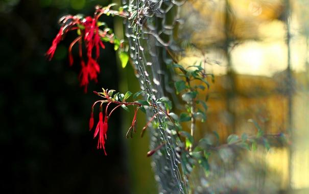 Фото обои забор, макро, цветы