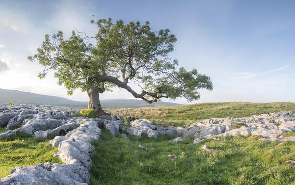 Фото обои камни, поле, пейзаж, дерево