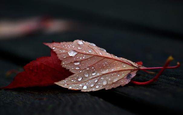 Фото обои природа, осень, листья