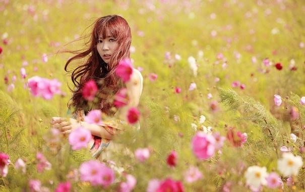Фото обои лето, девушка, цветы