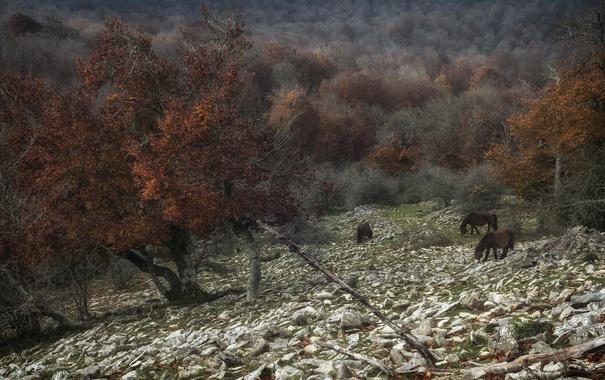 Фото обои природа, дерево, кони