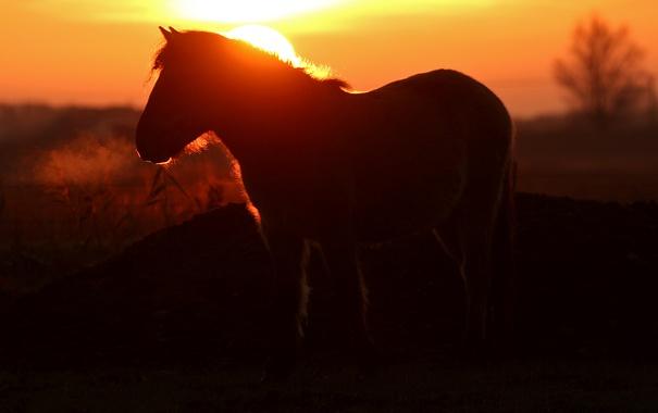 Фото обои ночь, природа, конь