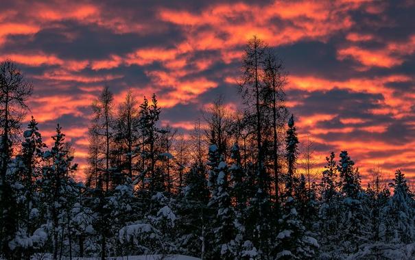 Фото обои закат, облака, деревья, зима, снег, небо